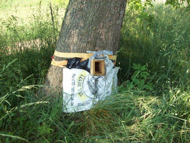 Hogan Bee Trap
